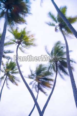 maledives ari atoll view to palm