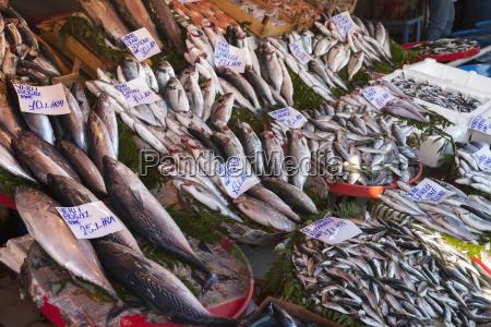 turkey istanbul variety of fish at