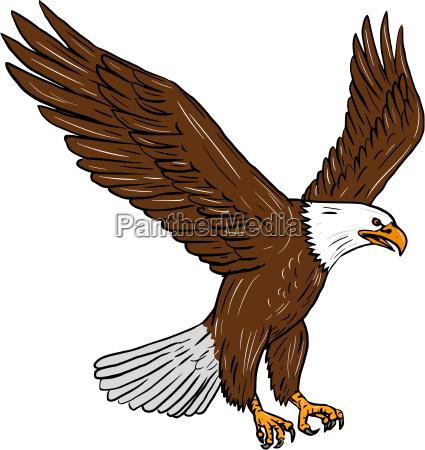 bald eagle fliegen zeichnung