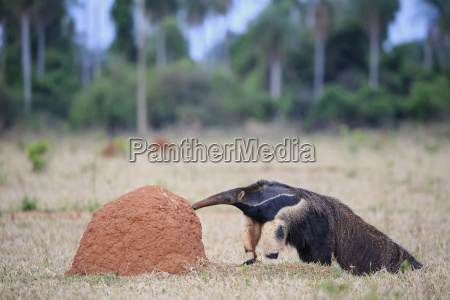 brasilien mato grosso mato grosso do