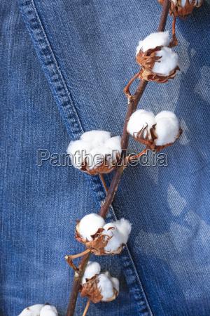 nutzpflanze sonnenlicht frische jeans buex buxe