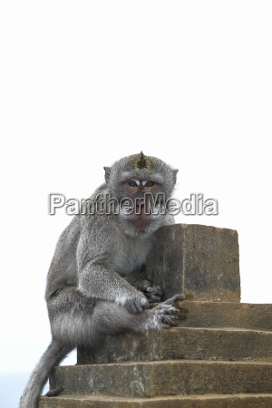 indonesia bali bukit pensinsula monkey temple
