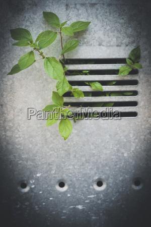 plant growing through grid