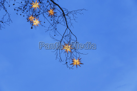 lighted christmas stars hanging in branches
