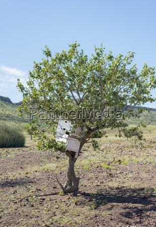 africa namibia damaraland himba settlement wooden