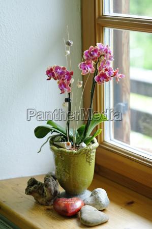 blumentopf mit orchidee stehend auf fensterbank