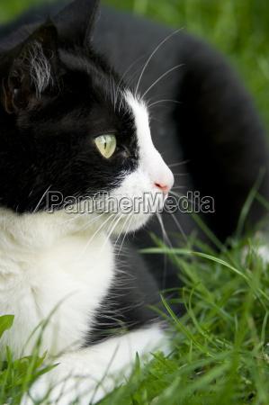 germany baden wuerttemberg cat sitting in