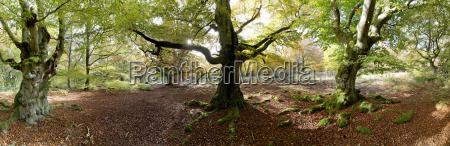 germany hesse kellerwald national park