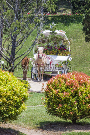 vietnam da lat horses in flower