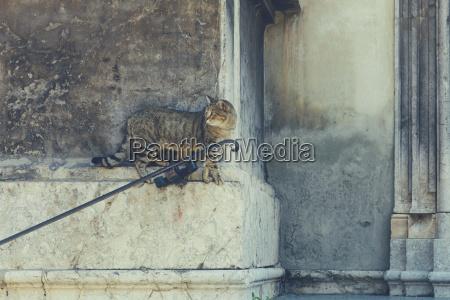 italy sicily palermo stray cat sitting
