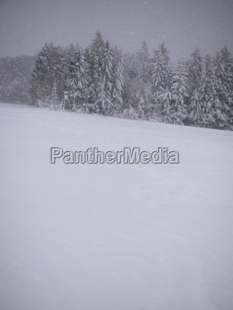 germany black forest winter landscape snowstorm