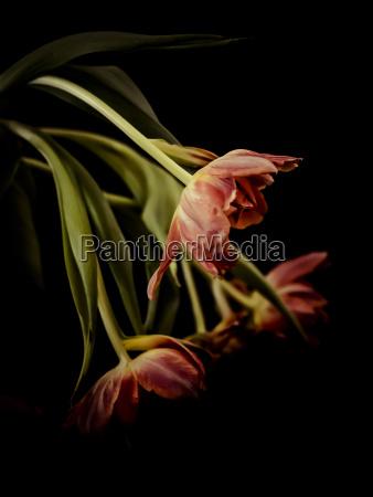 stilleben blume pflanze gewaechs bluete erbluehen