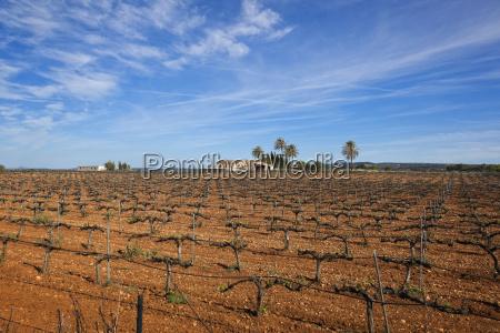 orden arbol suelo agricultura nube espanya