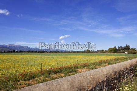 flor planta agricultura nube espanya al