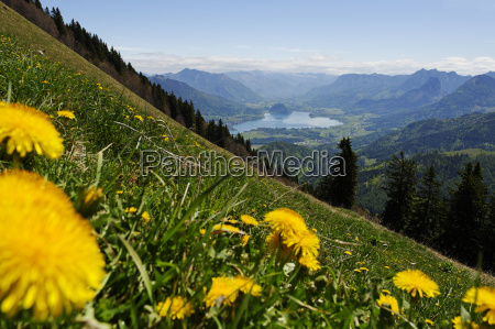 austria salzburg state view from zwoelferhorn