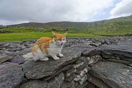 ireland county kerry near waterville fort