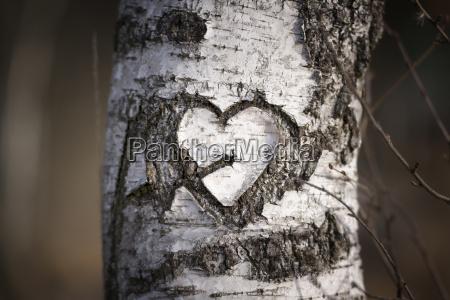 austria heart carved into a birch