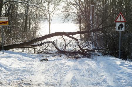 germany saxony fallen tree on street