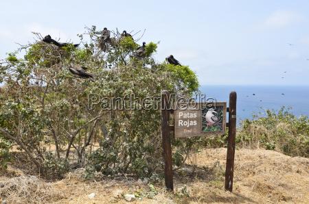 ecuador signpost of patas rojas trail