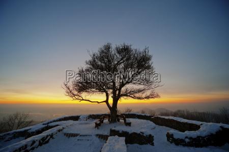 germany bonn siebengebirge bare tree at