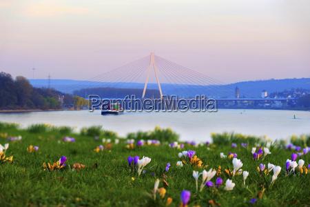 germany rhineland palatinate neuwied raiffeisen bridge