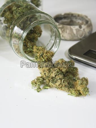 studio marihuana drogen auf weissem hintergrund
