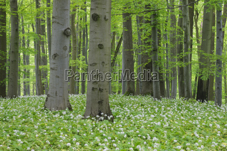 germany thuringia view of spring forest