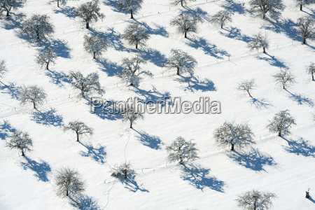 germany view of fruit trees on
