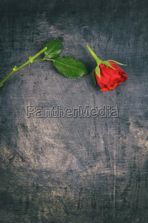 defekte rote rose auf hoelzernen hintergrund