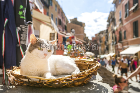 italy liguria vernazza one cat lying