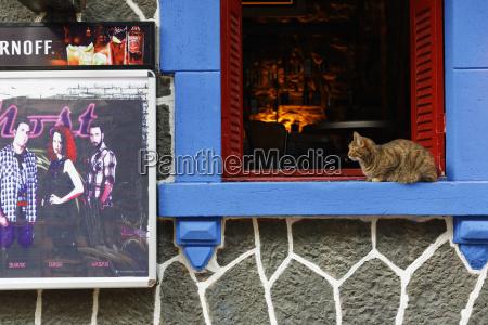 turkey izmir cat sitting on window