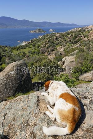tuerkei hund liegt in latmus bergen