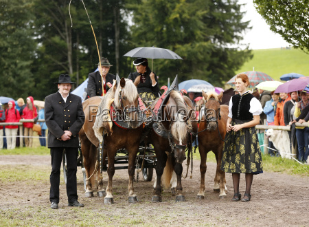 germany black forest horse carriage at