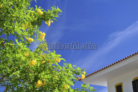 portugal blossoming tree and house