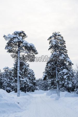 finland saariselkae snow capped trees