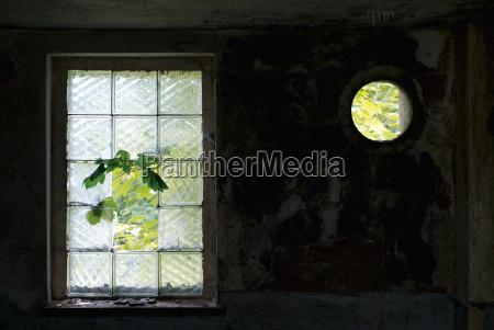 detail baum fenster luke glasfenster fensterscheibe
