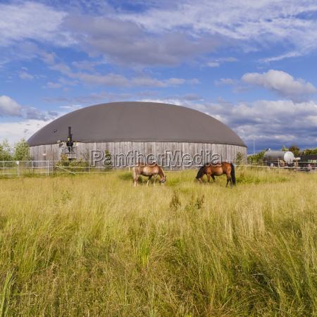pferd ross tier saeugetier landwirtschaft ackerbau