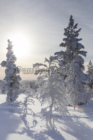 finnland near saariselka snow covered trees