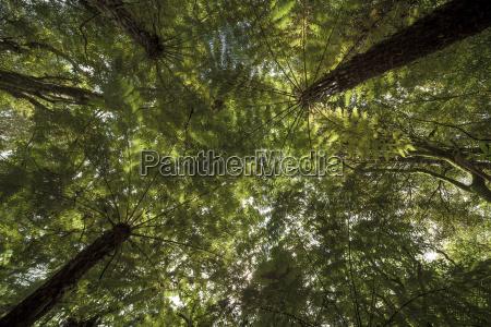 new zealand whitianga trees