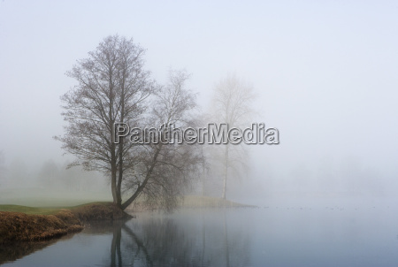 austria view of trees in morning