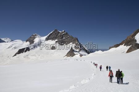schweiz berner oberland aletschgletscher bergsteiger auf