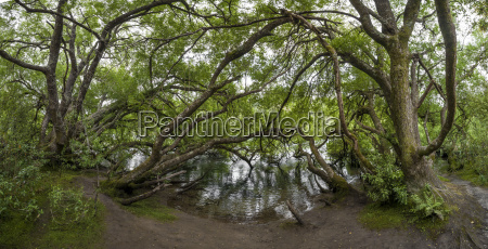 new zealand taupo trees at huka