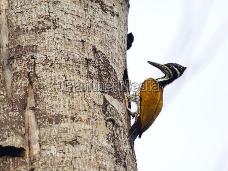 weiblich baum tier vogel outdoor freiluft