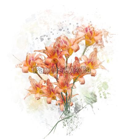 orange lily flowers watercolor