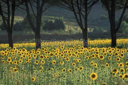 italy maremma north of grosseto
