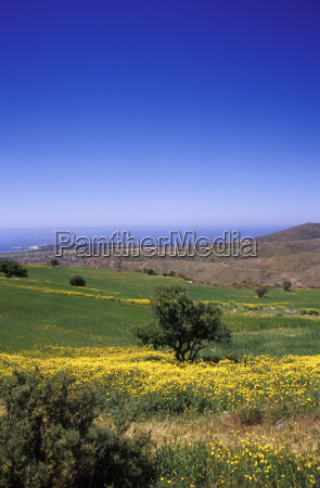 lush foliage against clear blue sky