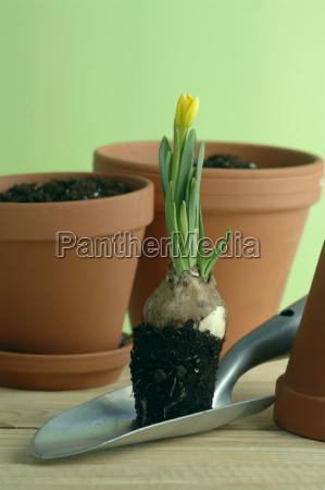 blume pflanze gewaechs frische fotografie photo