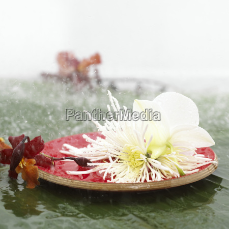 blossoms on wooden plate close up