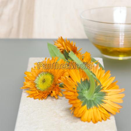 fluessig blume pflanze gewaechs frische dekoration