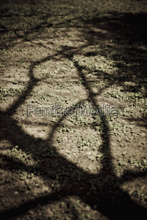 shadow of a tree close up